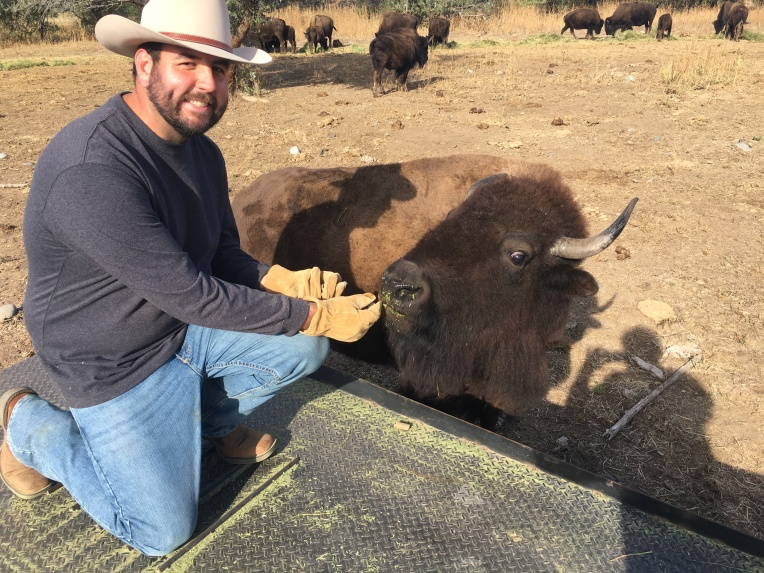Feeding the buffalo, don't do this at home!
